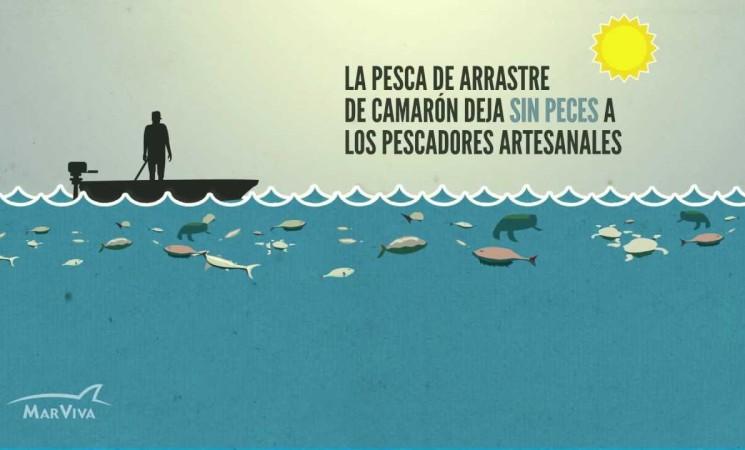 """""""Pesca de arrastre"""", empobrece y afecta a pescadores artesanales"""