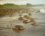 Comunidades podrán seguir dentro del Refugio de Vida Silvestre de Ostional