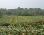 Emergencia por agua contaminada con agroquímicos