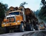 Apoyamos reforma a Ley Forestal