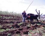 Día de la Persona Agricultora