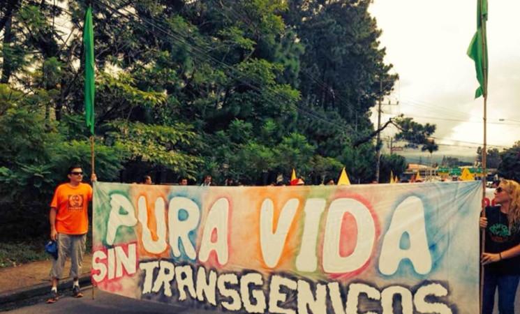 Proyecto Frente Amplio: Restricción a la liberación al ambiente de transgénicos.