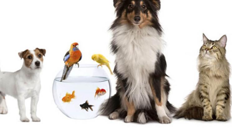 Posición del FA sobre Protección Animal.