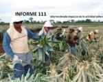 Informe semanal de labores 111