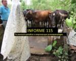 Informe semanal de labores 115