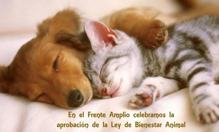 Aprobada Ley de Bienestar Animal